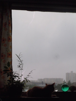 雷とトラblog.jpeg